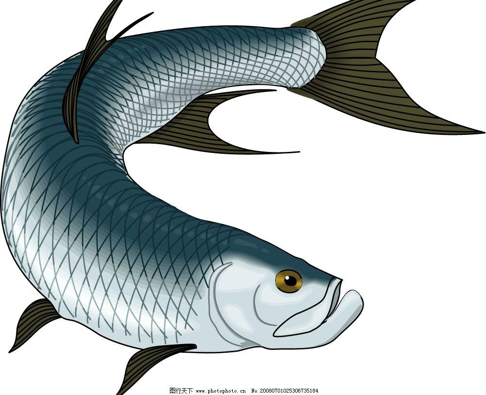 大海鲢 鲨鱼 鱼 海洋生物