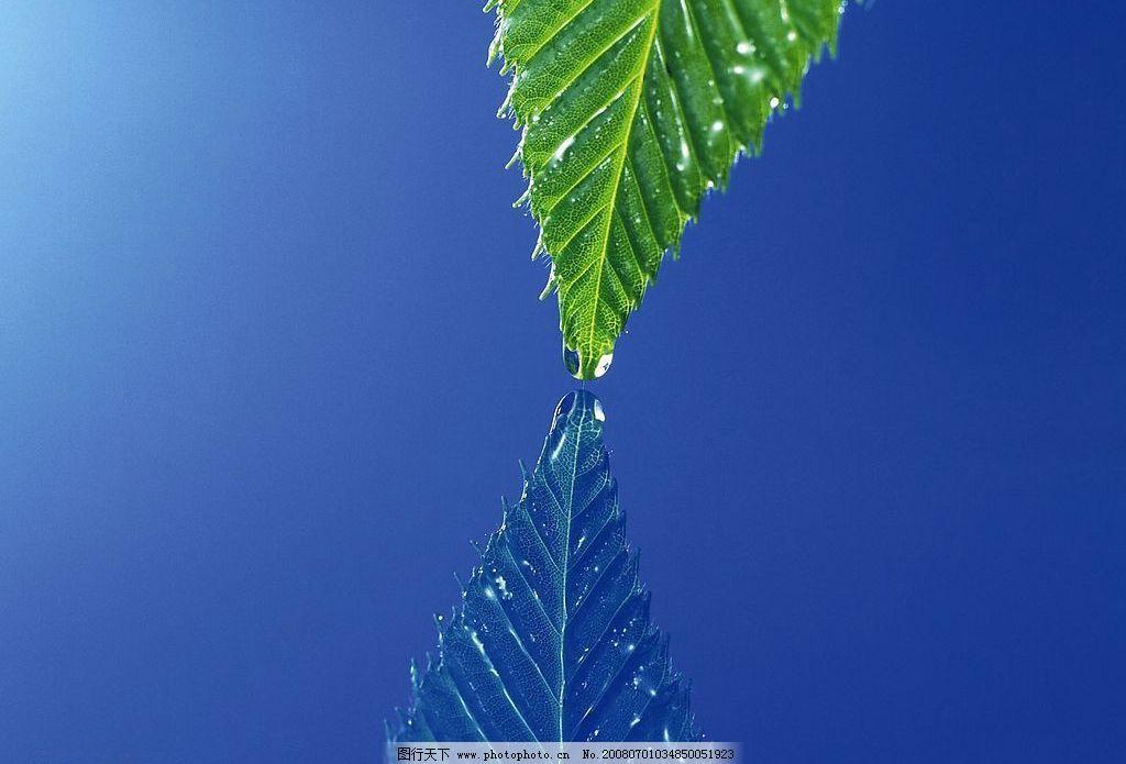 叶子特写 树叶,水 自然景观 自然风景 摄影图库 96 jpg