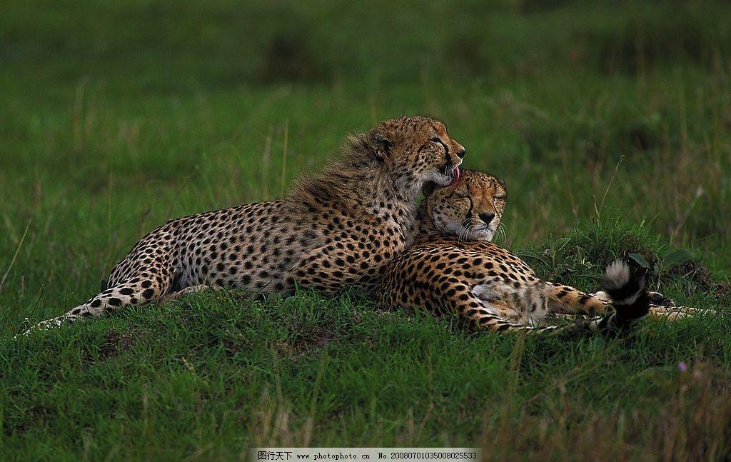 动物 非洲 非洲草原