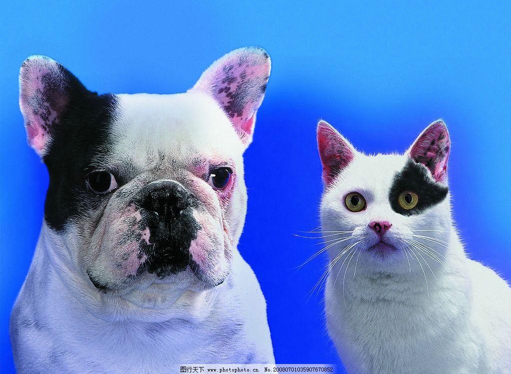 海盗猫狗的对比 眼罩 猫咪 狗狗 宝贝 动物 可爱的动物宝宝 摄影图库