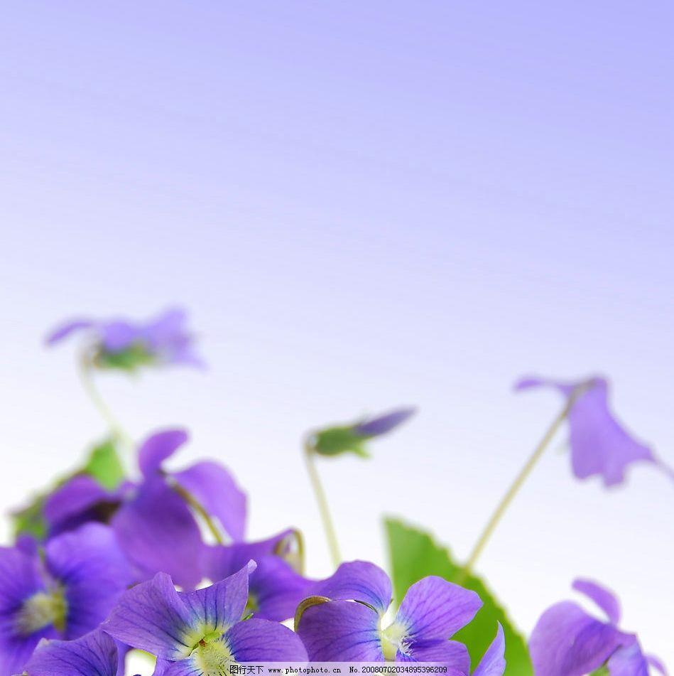 优雅紫色花朵图片素材_自然风景_自然景观_图行天下