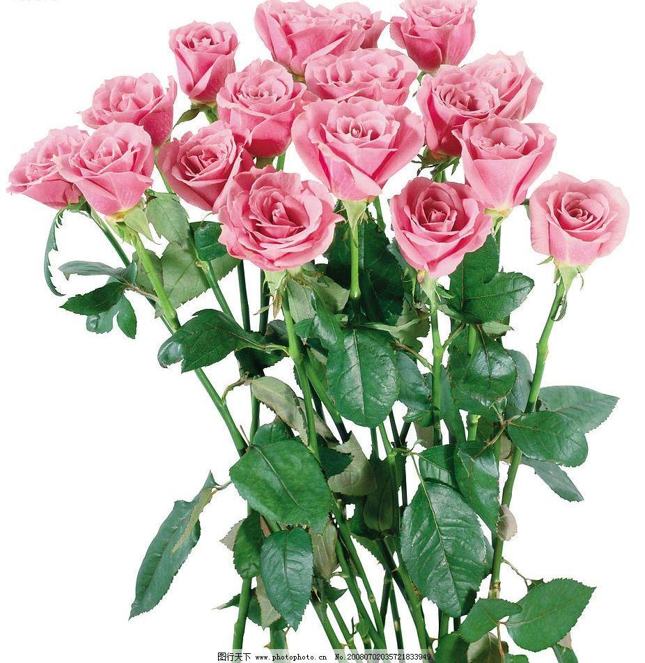 玫瑰花图片图片