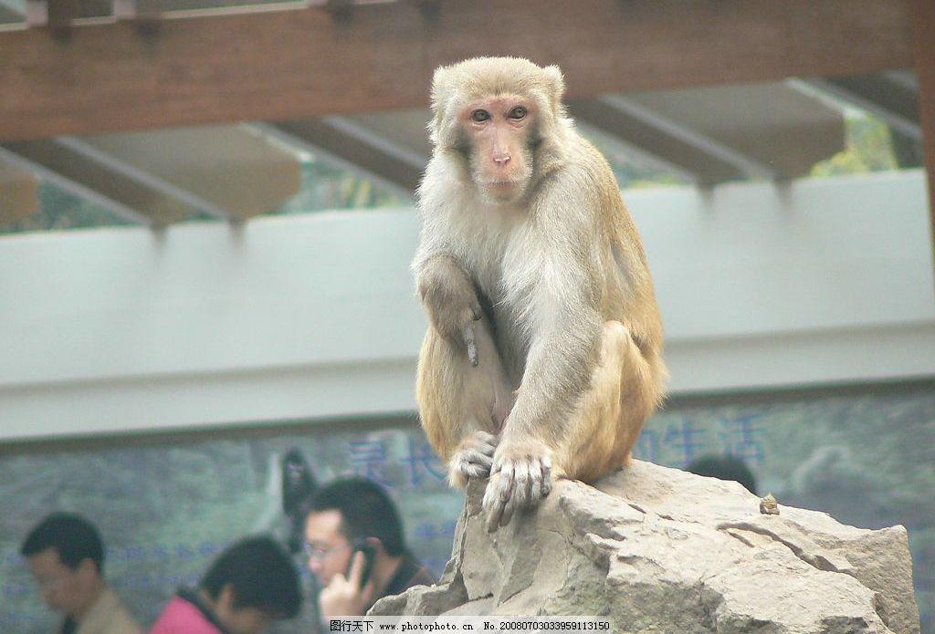 猴子 动物园 旅游摄影 国内旅游 摄影图库