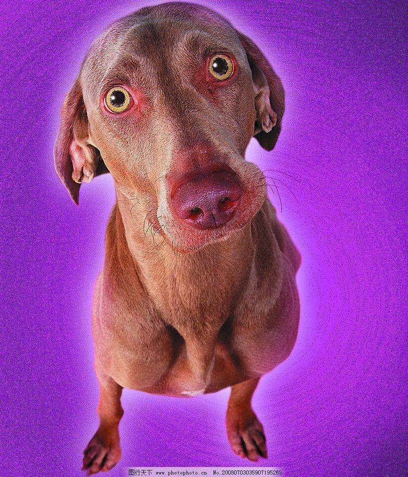 像猪的狗 宝贝 动物 表情 可爱 可爱的动物宝宝 摄影图库
