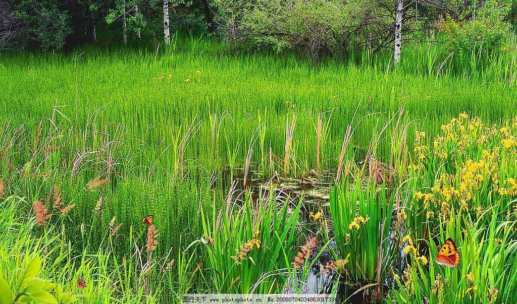 春天风景 春天 树林 绿色 草地 花朵 蝴蝶 水草 摄影图库 自然风景