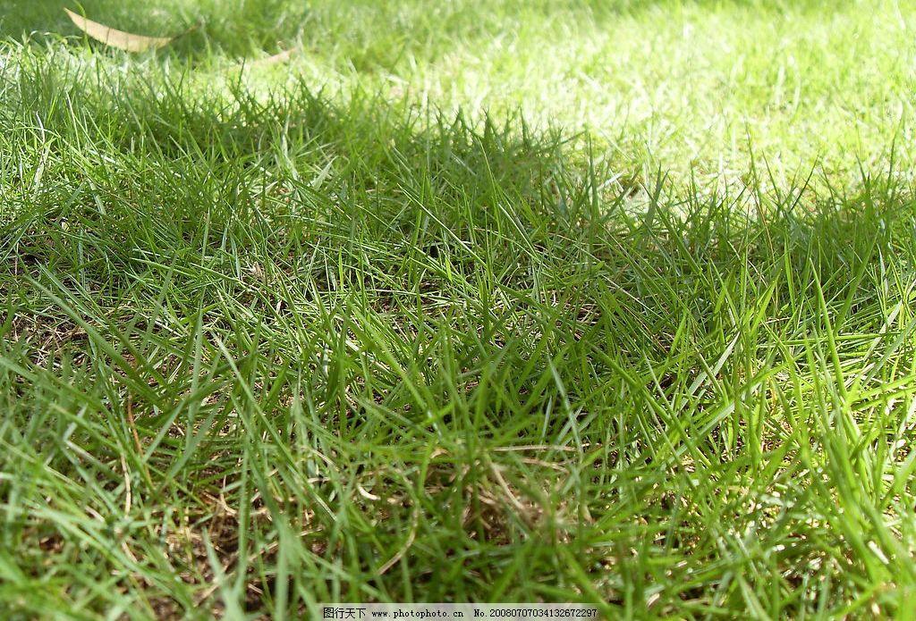 草地 草地阳光晴朗绿色阴凉 旅游摄影 自然风景 摄影图库 96 jpg
