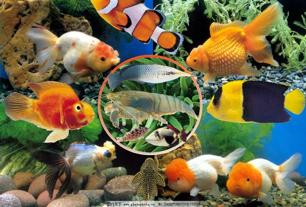 漂亮的鱼类 鱼 金鱼 虾 海底世界 海鲜 水族馆 水中世界 海洋生物 psd