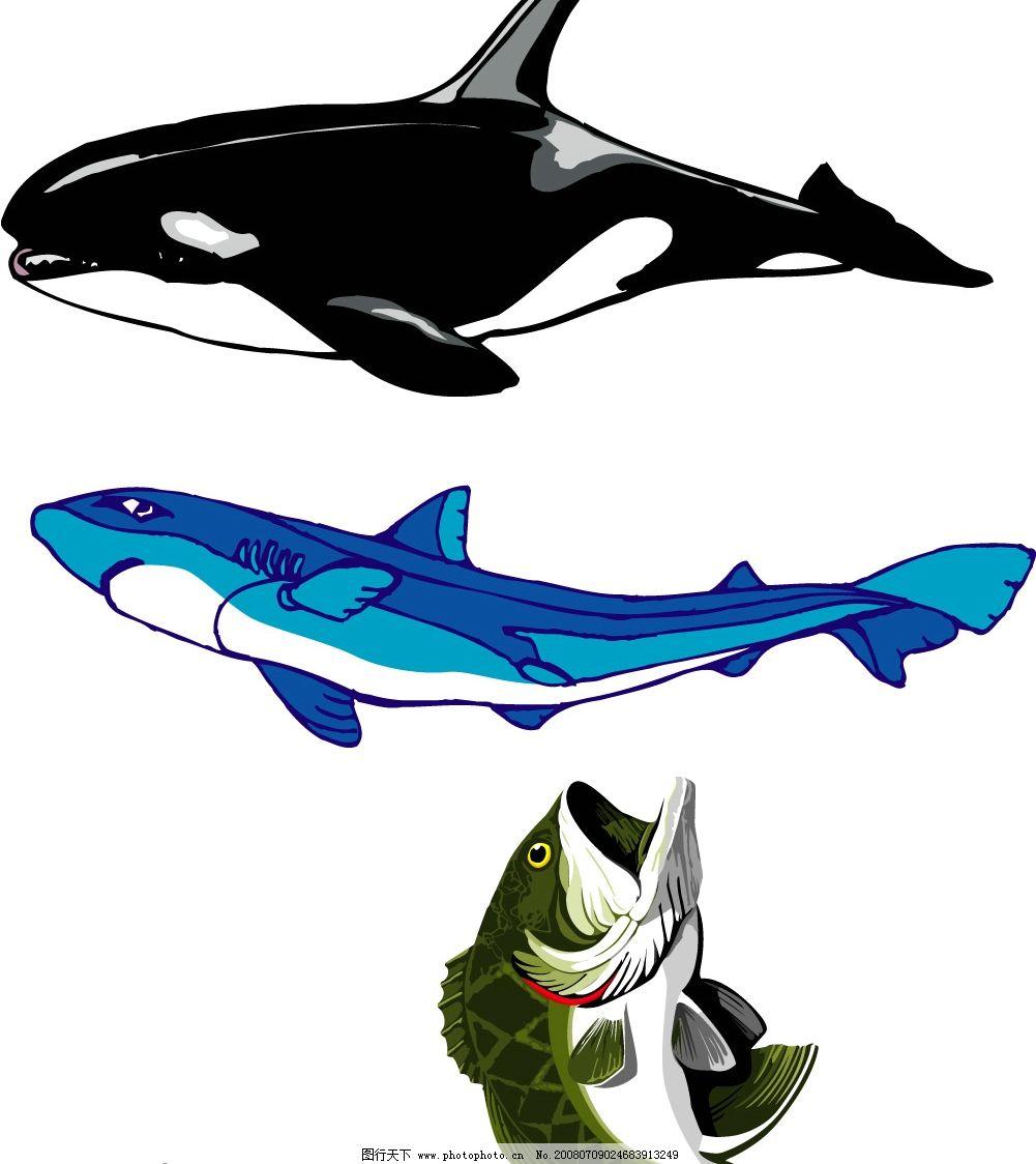 手画矢量鱼图片图片