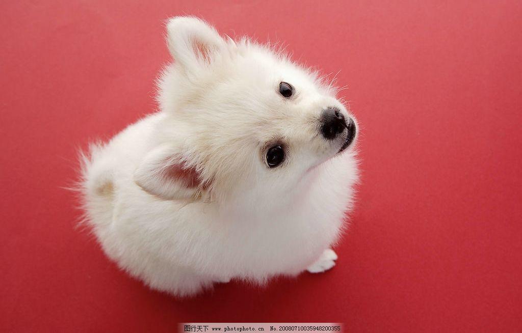 宠物狗 狗 生物世界 家禽家畜 动物篇 摄影图库 350 jpg