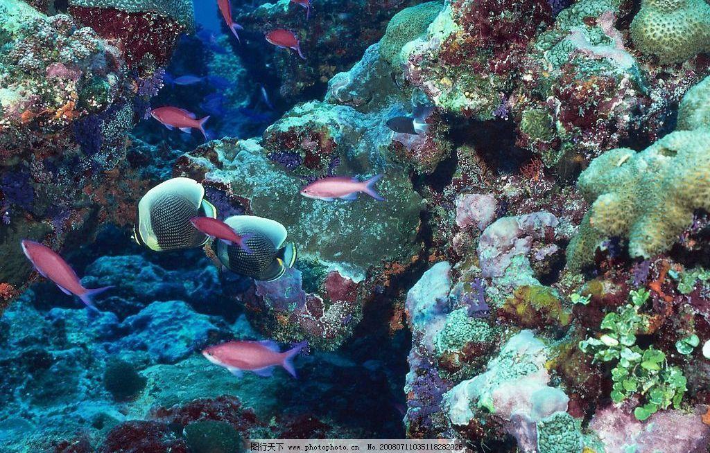 海底世界 海底生物 鱼 生物世界 海洋生物 摄影图库
