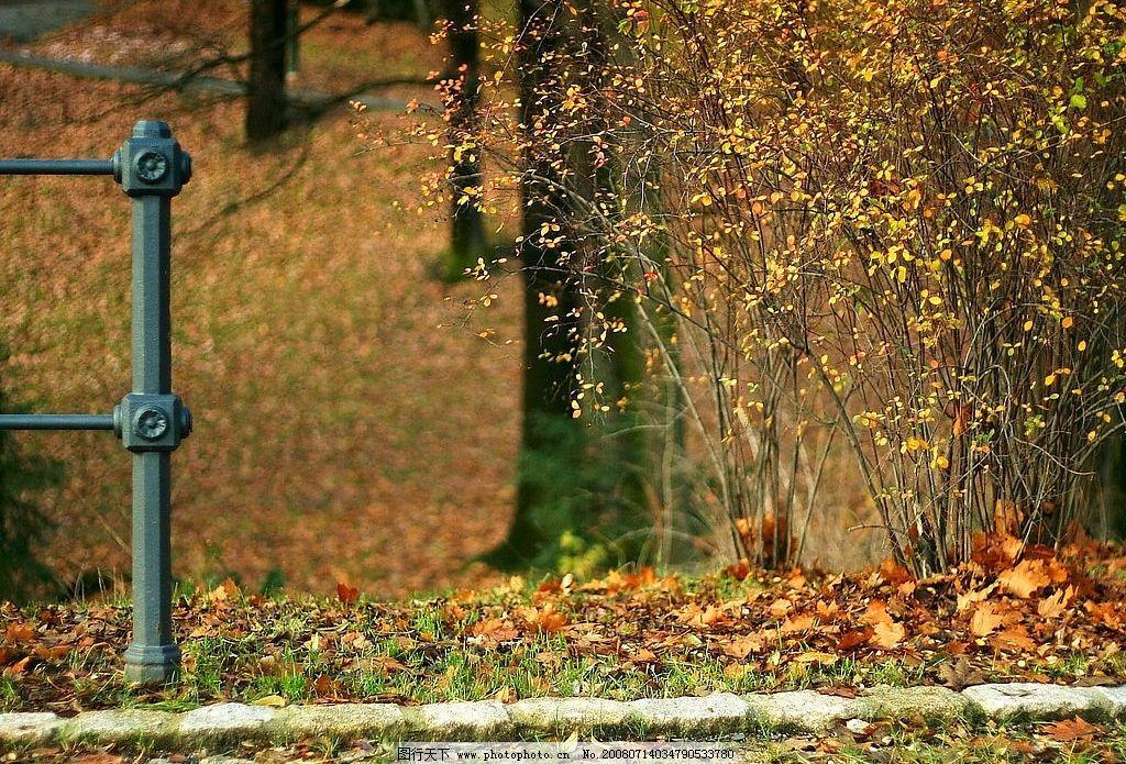 城市风景 秋天 飘落的枫叶 道路 栏杆 建筑景观 设计素材 摄影图库