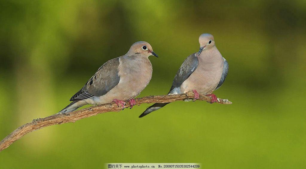 小鸟 可爱小鸟 树木 生物世界 鸟类 鸟的世界 摄影图库 300dpi jpg