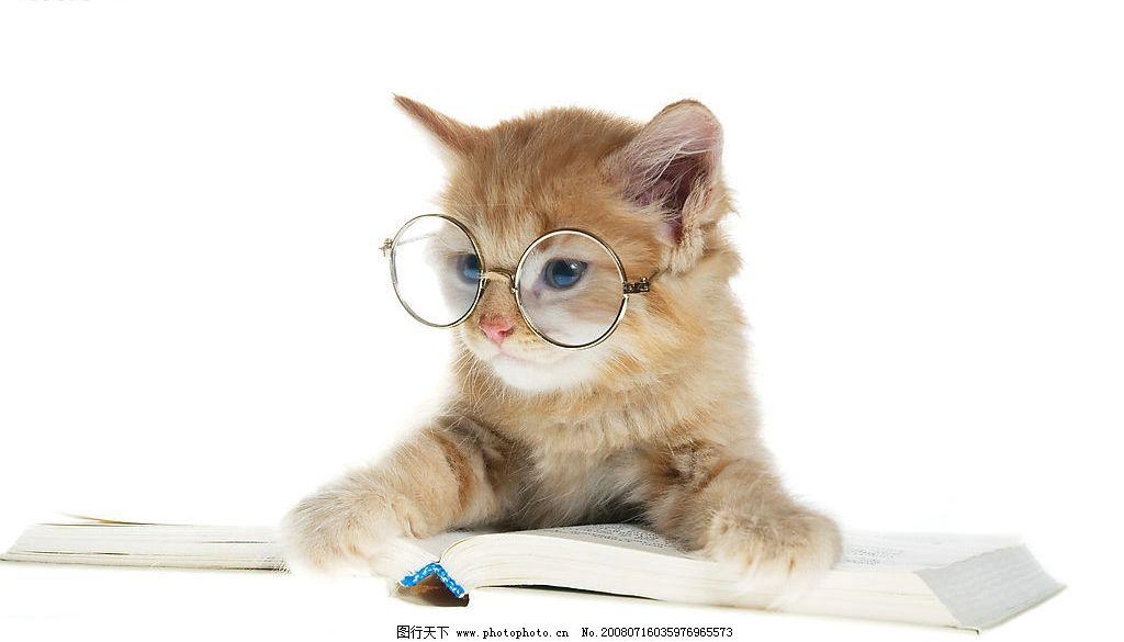 壁纸 动物 狗 狗狗 猫 猫咪 小猫 桌面 1024_585