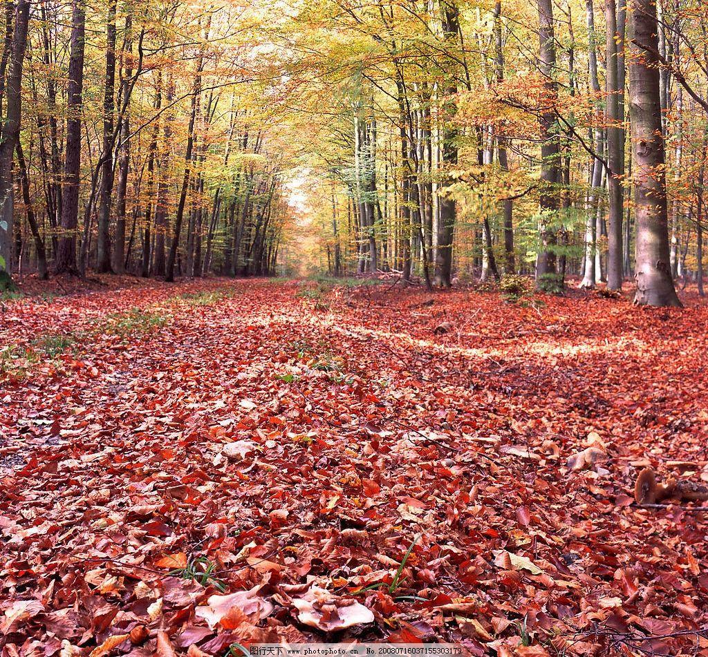 树林 树 秋天 落叶 红叶 枫叶 叶子 树木 高精图 生活百科 娱乐休闲