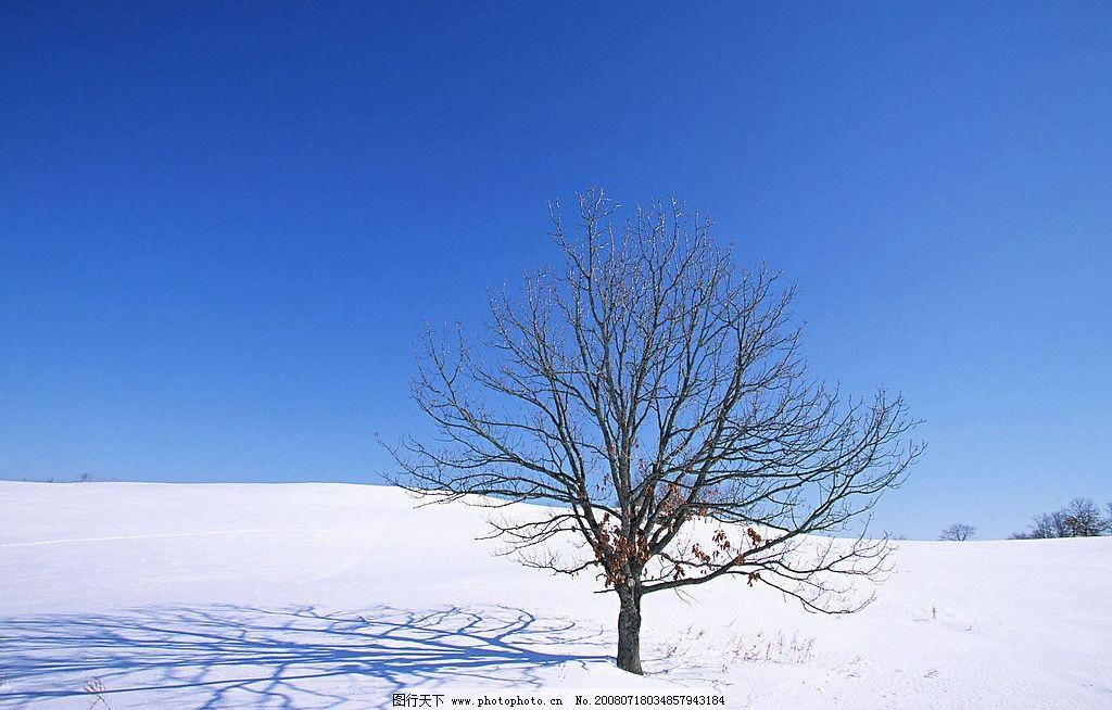 冬天风景 冬天 风景 树 雪 天空 自然景观 自然风景 摄影图库 350dpi