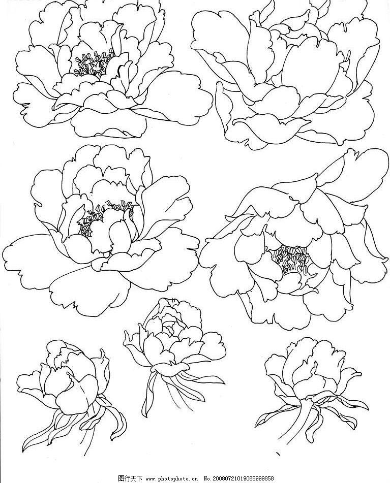 白描牡丹2 国画 工笔 白描 牡丹 花头 文化艺术 绘画书法 设计图库