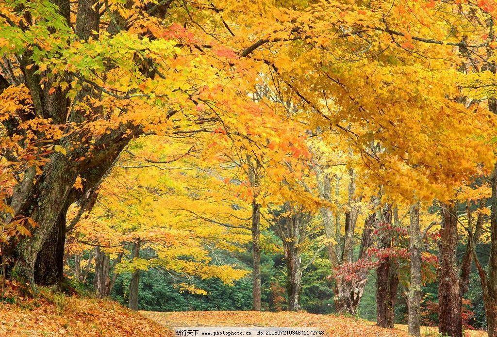 秋天 落叶 自然景观 自然风景 摄影图库 72dpi jpg