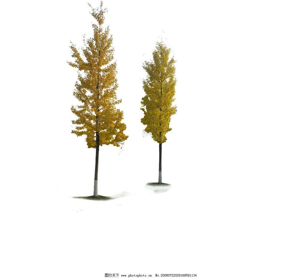 psd树材 银杏树 环境设计 景观设计 源文件库 72dpi psd