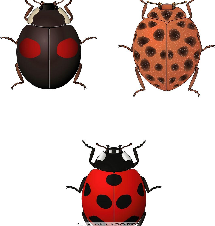 甲虫 三只可爱的甲虫 生物世界 昆虫 矢量图库 ai
