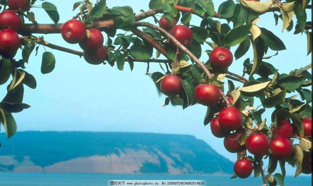 秋天景色 秋天 景色 果树 果实 远山 大海 丰收 自然景观 自然风景
