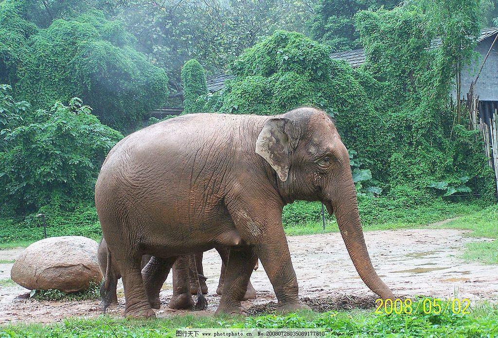 大象 动物 生物世界 野生动物 摄影图库 230dpi jpg