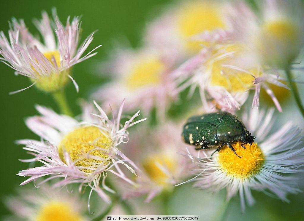 花朵 美丽 风景 自然 摄影图库