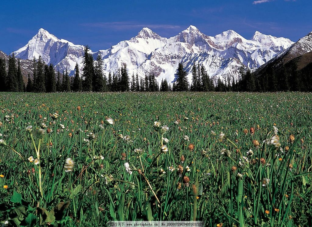 雪山 蓝天白云 树林 花草 自然景观 自然风景 摄影图库 342dpi jpg