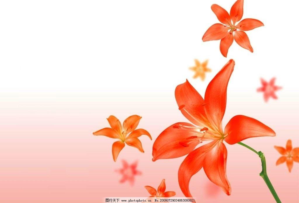 红花 素材 背景 喜庆 自然景观 自然风景 风景 摄影图库 72dpi bmp