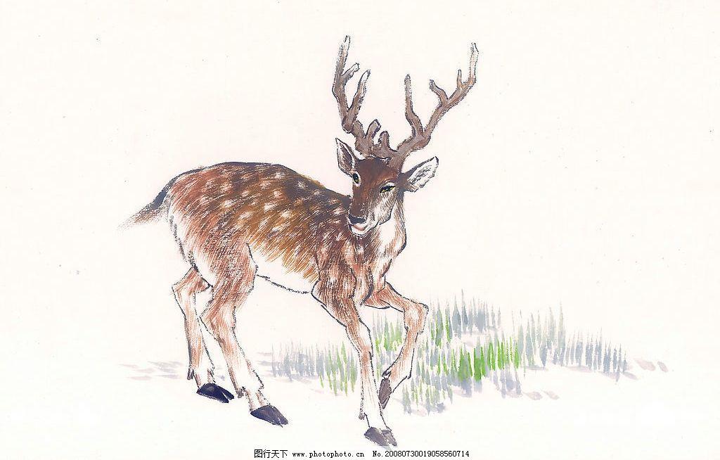 中国国画 植物 动物 梅花鹿 国画 水墨 草 鹿 文化艺术 绘画书法 中国