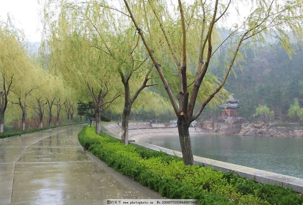 湖边柳 柳树 湖边 湖水 雨后 自然景观 山水风景 摄影图库 72dpi jpg