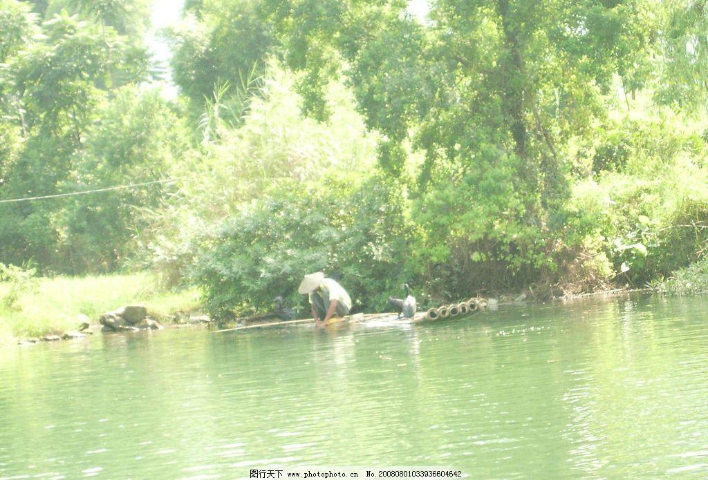 风景 漂亮风景 精美风景 树 植物 水 捕鱼 动物 人物 渔民 湖水 鸬鹚