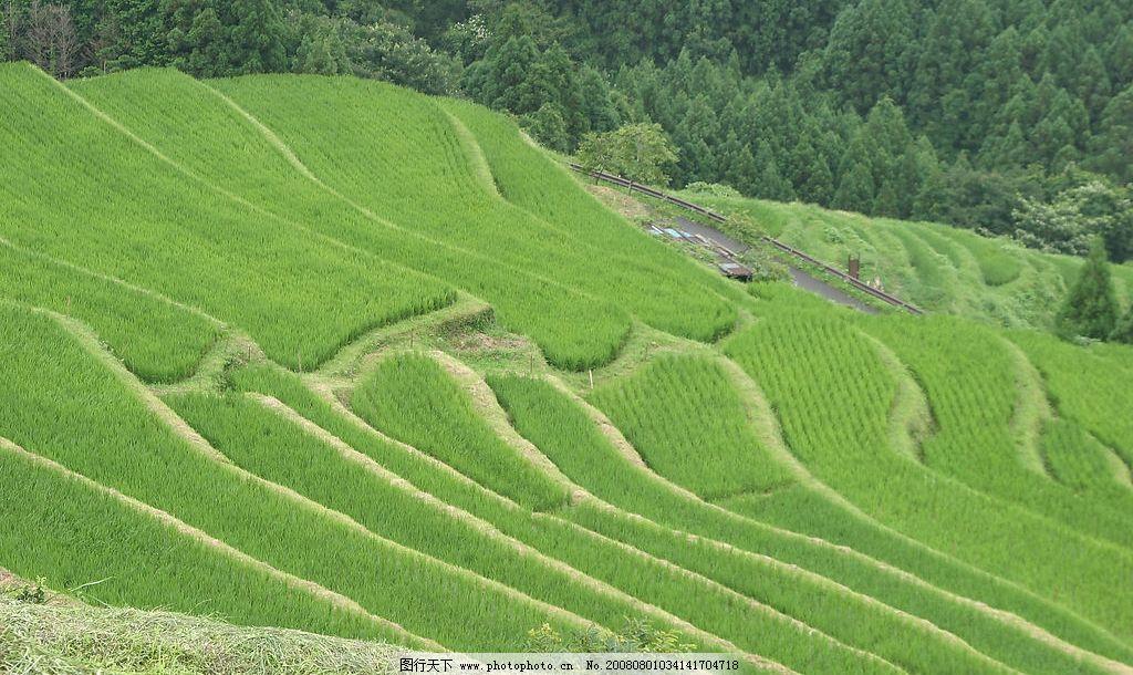 梯田 绿色 禾苗 森林 希望 树林 美丽 神奇 整齐 阶梯 旅游摄影 自然