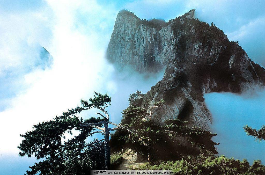 黄山风景 蓝天白云 云雾弥漫 陡峭山峰 耸立的青松 摄影图库