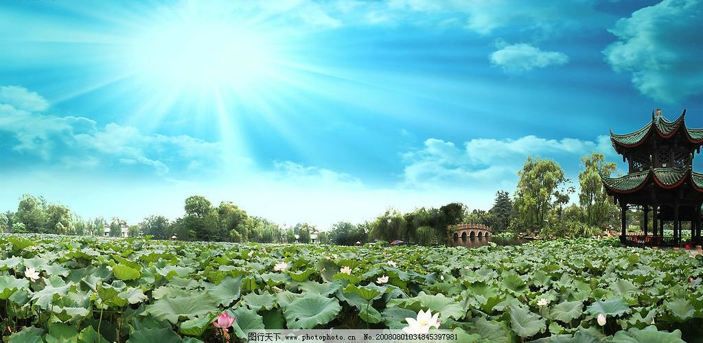 超大超清晰荷塘荷花 荷叶 莲叶 蓝天 白云 风景 摄影 自然 景观
