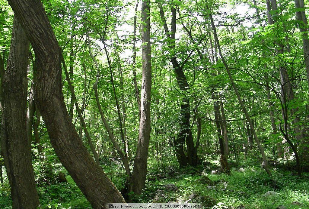 壁纸 风景 森林 桌面 1024_695