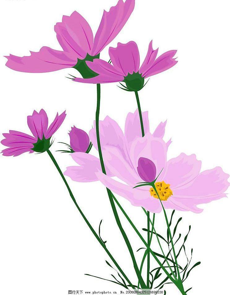 紫色花图片