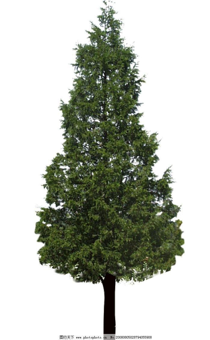 树木 三角形 树叶 松树 源文件库