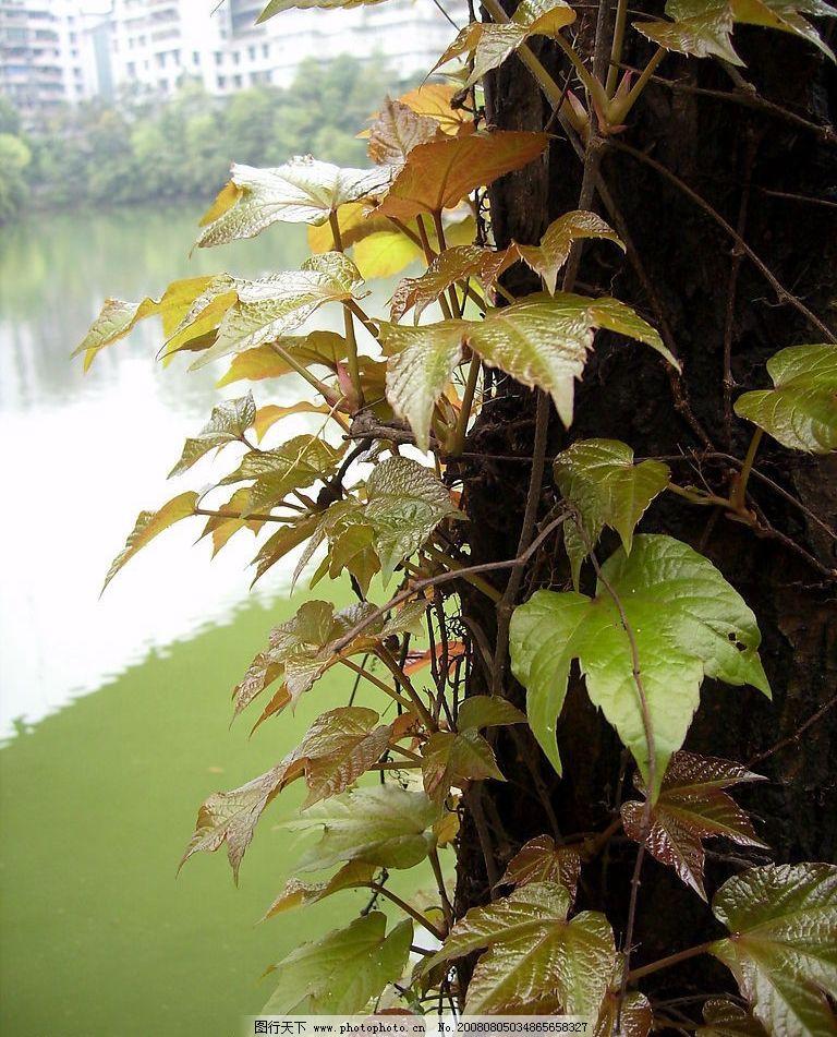 叶子 春天 嫩叶 公园 风景      自然景观 自然风景 摄影图库 96dpi