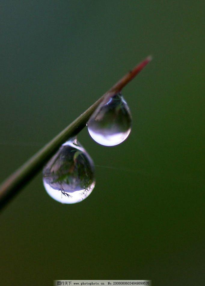 露珠 樹葉 水滴 自然景觀 自然風景 攝影圖庫 41dpi jpg