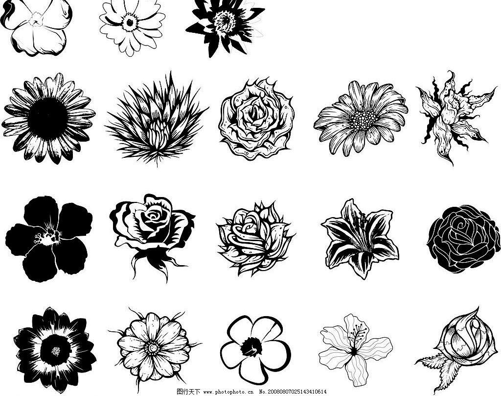 15种黑白花 花纹 生物世界
