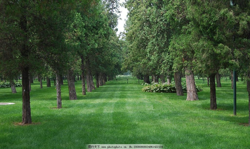 林荫大道 树 草坪 草地 树林 大树 自然景观 自然风景 摄影图库