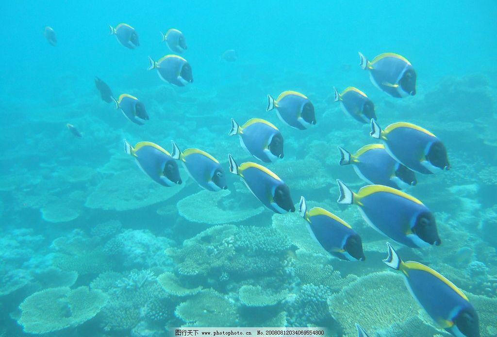 马尔代夫 珊瑚礁 鱼 海底世界 旅游摄影 国外旅游 马尔代夫风光 摄影