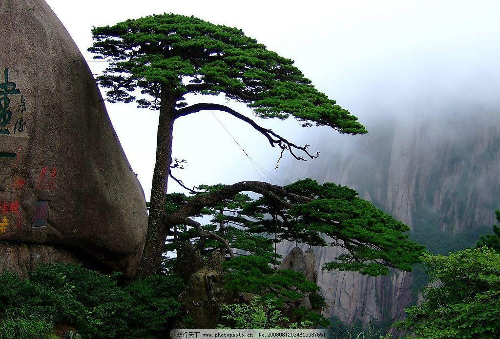 迎客松 中国五岳名山之一 风景 摄影图库