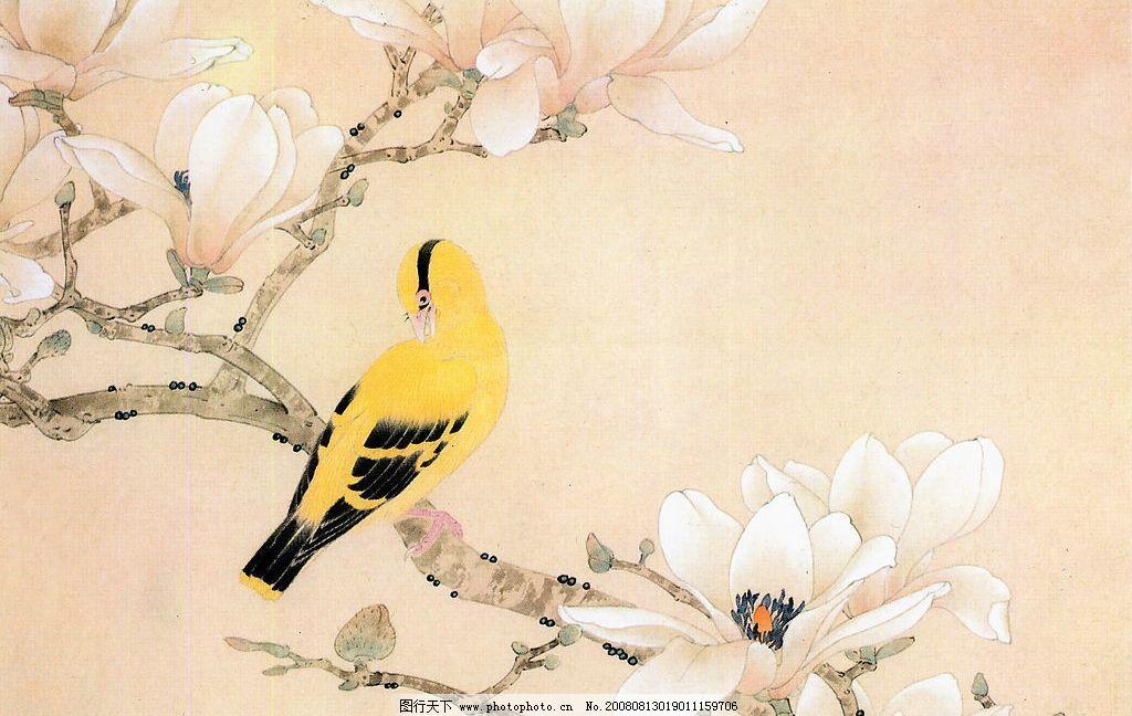 黄鹂 黄鹂鸟 玉兰花 文化艺术 绘画书法 工笔画 设计图库 360dpi jpg