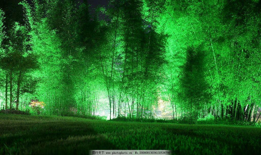 竹林 竹林夜景 摄影 夜晚 旅游摄影 自然风景 摄影图库