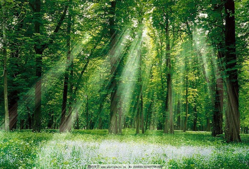 林木风景 阳光 树林 花草 自然景观 自然风景 风景 摄影图库 96dpi图片