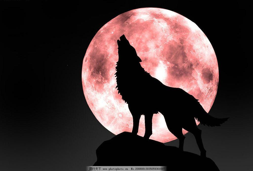 呼唤的狼 黑夜 月光 生物世界 野生动物 生物世界——野生动物 摄影