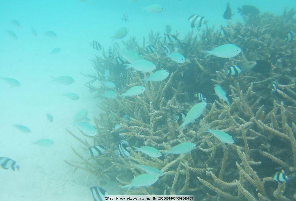 马尔代夫海底世界 马尔代夫 珊瑚礁 海滨 海底世界 旅游摄影 国外旅游