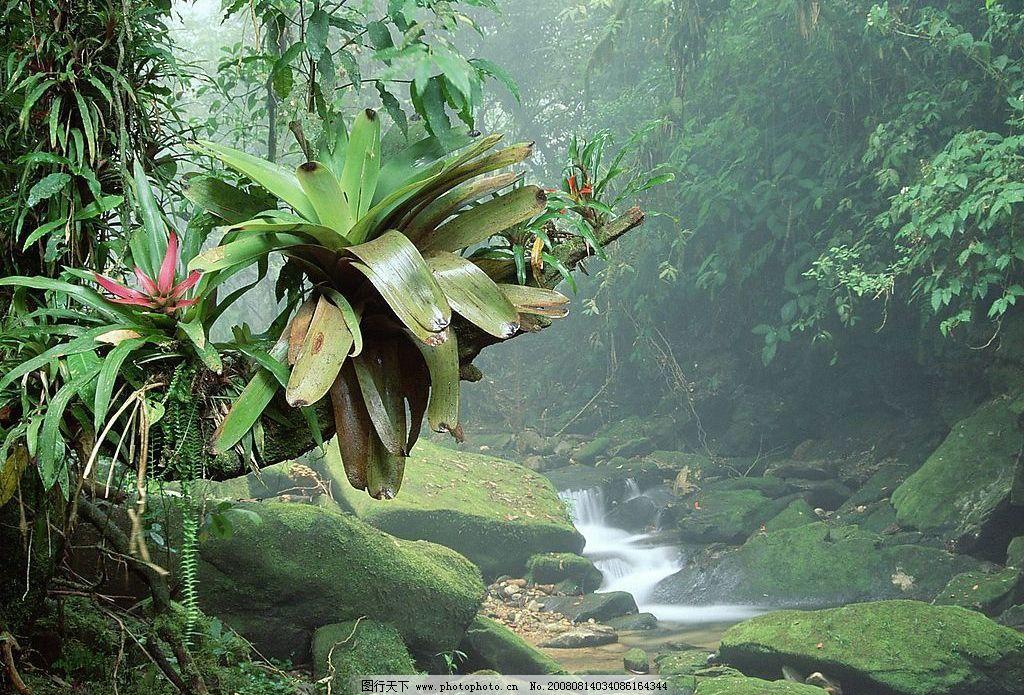 巴西波凯那国家公园热带雨林 旅游摄影 国外旅游 世界各地自然风景