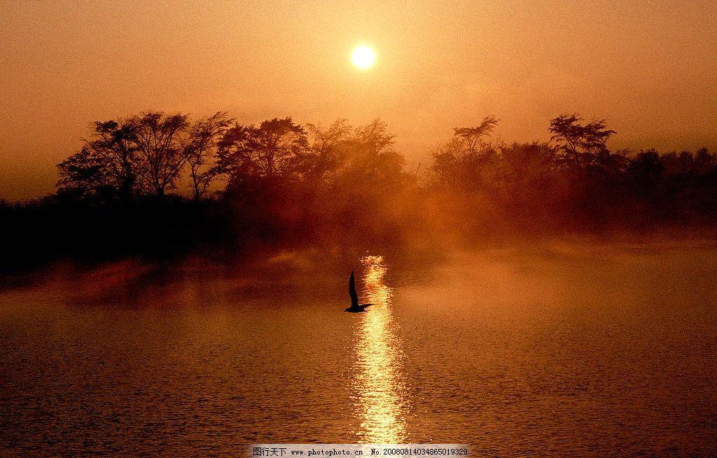 夕阳美景 黄昏 日出 海面 树 太阳 海鸥 自然景观 自然风景